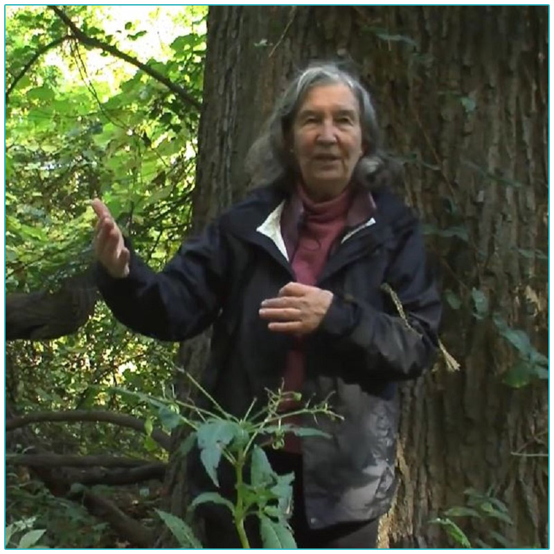 still frame from Forest Medicine video featuring Diana Beresford-Krueger